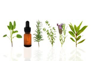 Benefits of EucalyptusOil