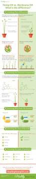 Hemp-Oil-vs-Marijuana-Oil-Healthy-Hemp-Oil.com_