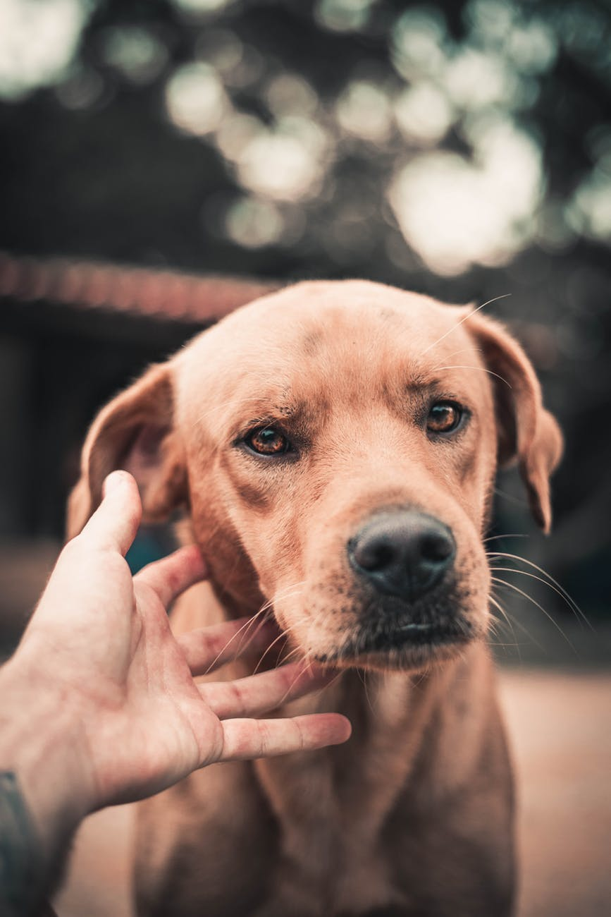 Dogs and CBD